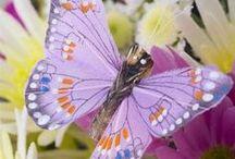 ♡ Dieren; Vlinders - Libellen...