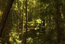 Redwood, nature & co. / Paysages, nature, plantes et toutes autres verdures qui nous entourent en Californie.