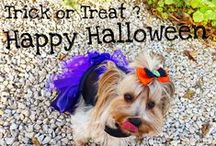 Halloween Sweetie Dog / Une envoûtante collection de déguisement et harnais pour chien www.sweetiedog.com #doghalloween #dog #dogclothes #dogaccessories