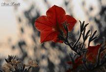 My photo with Nikon D5200 / Foto scattate da me con Nikon D5200