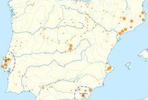 Iberian DNA / Iberian DNA