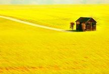 """Fields of Gold / """"Turn your face to the sun and the shadows will fall behind you."""" -Charlotte Whitton"""