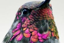 Hummingbirds / The smallest birds