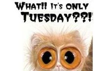 Tuesday / It's only Tuesday ...