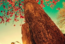Trees / by Monica Howkins
