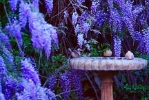 Gardens / by Monica Howkins
