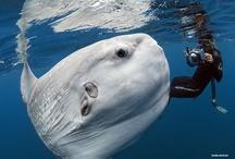 Underwater World / by Monica Howkins