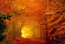 The color of fall / by Monica Howkins
