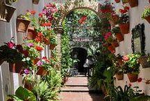 Andalusia = Life