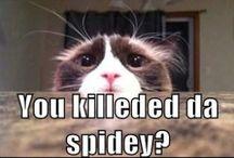 KITTY CAT / I LOVE CATS