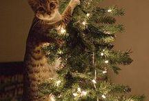 Cats / I love !