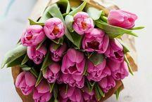 Delicate Tulips