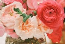 Roses are Red.. and White, and Pink and Rainbow!