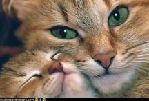Kitty Cat / by Sandra Copely