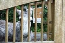 New Forest Donkeys Daisybank Cottage