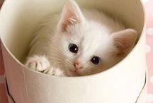 Simply Kitties
