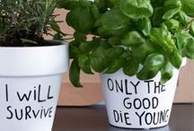 DIY Herbs / Herbs to support health.
