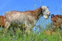 Animals - Spain / There are many kinds of animals in Spain, pets and wildlife. These I have found in Andalusia in Southern Spain and in Gibraltar.