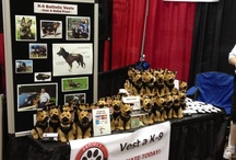 2012 Atlanta Pet Expo / October 27, 2012 / by Project Paws Alive