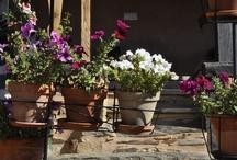 Flores y vegetación en Albergue Casa Las Águedas