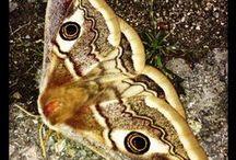 Insects / Su ogni tipo di insetto  / by Rudy Massaro