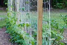 Growing Vegetables Outdoors / Planting your seeds by directly sowing them outdoors!  / by SeedsNow.com