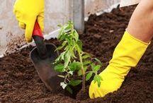 Transplanting Seedlings Outdoors