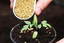 Fertilizers / by SeedsNow.com