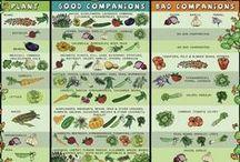 Companion Planting / by SeedsNow.com