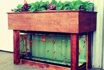 Aquaponics / by SeedsNow.com