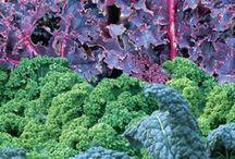 Kale / by SeedsNow.com