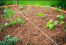 Pizza Garden Ideas / How to build and eat from a Pizza Garden!