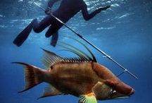 Fishing in Florida / The best spots to fish, different species that are caught daily and information/advice on how to make the most of your fishing trip.