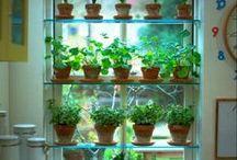 Indoor Herb Gardens / by SeedsNow.com