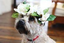 Wedding Day Doggies