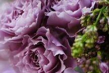 Terra / Piante, fiori, animali...le bellezze e le meraviglie della natura