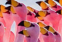 I love flamingo)