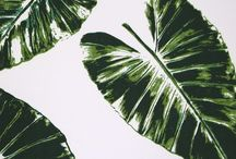 tropical / botanical