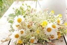 A Inspired by Lemon / Nascemos inspiradas pelas Plantas Aromáticas e Medicinais,  pelo seu aroma e sabor a limão. Cultivamos em terras outrora de monges, mas também de uma valente padeira. O sítio é Boavista, a freguesia é Aljubarrota e o concelho é Alcobaça. Estamos a crescer desde maio de 2014.  Cuidamos das nossas plantas e ajudamo-las a crescer, preservamos todas as suas propriedades e defesas naturais. O nosso Modo de Produção é Biológico, certificado pela Ecocert.  Bem-vindo à Inspired by Lemon!
