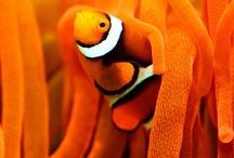 Oresome Orange