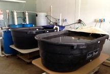 Port Washington Aquaponics / Explore the stages and learning experiences of Portfish, LTDs very own aquaponics systems.