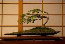 Love ....Bonsai....