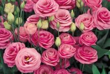 Blossom memory / Flowers