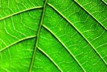 leaves / by jan melick weintraub