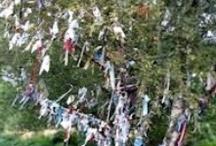 wishing trees / by jan melick weintraub