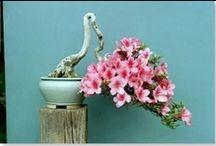 Plant life / by Topaz Mortmain