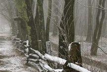 Winter / The best season!