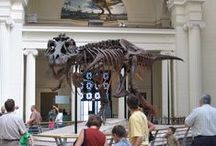 Museum Community / A look at what's happening at other museums and galleries around the world.  / by Royal Tyrrell Museum