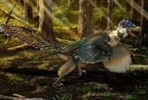 Illustrations / Illustrations like these are used in Scientific journals. / by Royal Tyrrell Museum