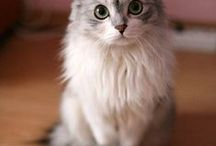 Cats and kittens / Beloved, purring and meowing. Their soft fur calms and brings happiness.